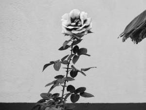 Фотовыставка «Кадровые решения Олега Мусина»