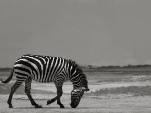 Антон Лялин. Исчезающая Африка