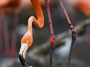 Фотовыставка «САМОЕ УДИВИТЕЛЬНОЕ» от журнала «National Geographic Россия»