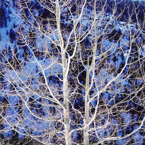 Пылающая зимняя осина, Колорадо, 2000
